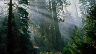 Watch Art Garfunkel Bright Eyes video