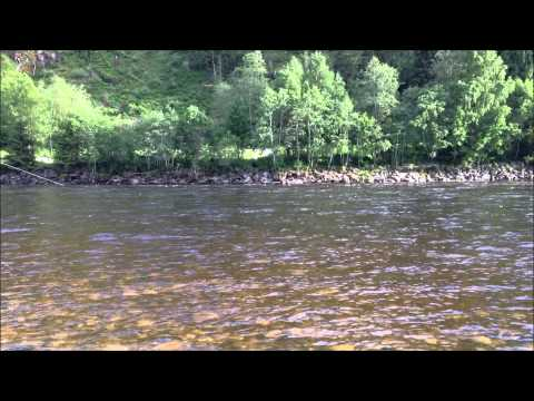 Gaula Salmon 2013 - Chris Henshaw 8,4 kg - Norwegian Flyfishers Club