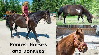 Ponies, Donkeys and Horses on our Petting Farm