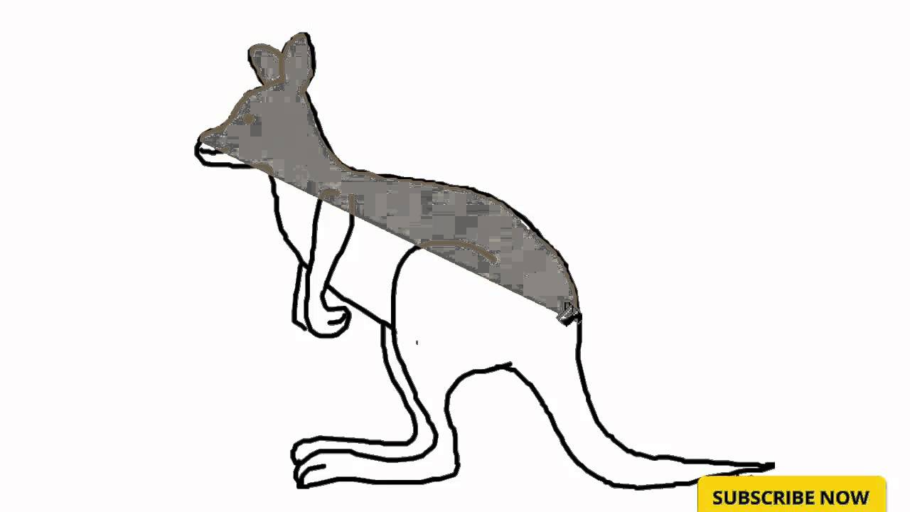 Kangaroo feet drawing