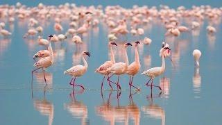 """Wildlife Wonders of South America"" 4K UHD 1HR Film  - Salar De Uyuni & Patagonia Scenes + Music"