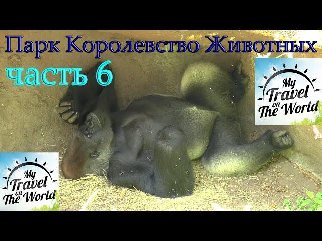Парк Королевство Животных Диснея (Animal Kingdom Theme Park) Орландо, США