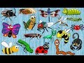 INSECTS For Kindergarten Learn INSECTS And BUGS Names For Kids 20 INSECTS mp3