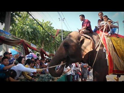 Elefánt Show Thaiföldön