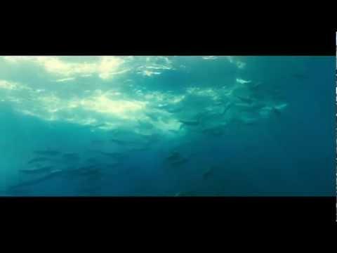 La vita negli Oceani – Trailer Ufficiale HD ITA (AlwaysCinema)