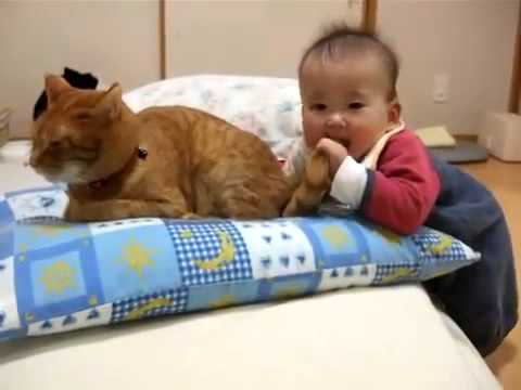 funny video new 2013 clips 3.Baby bites cat's tail.