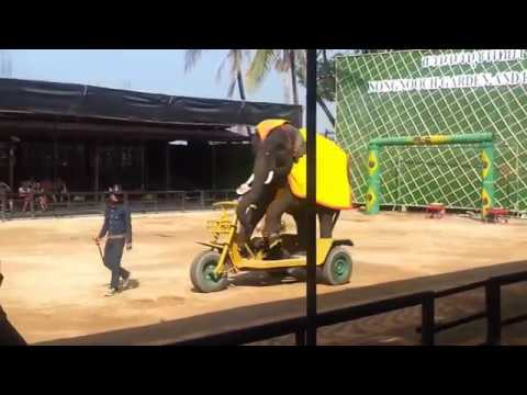 Таиланд Паттайя Шоу слонов