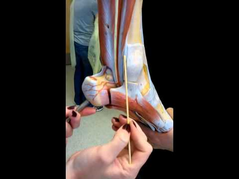 Foot Model.3gp video