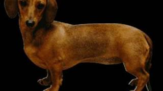 Watch Parry Gripp Wiener Dog Riding A Skateboard video