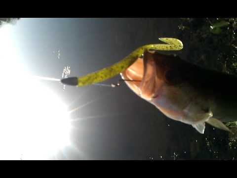 Ft.lauderdale Florida bass fishing..I 75