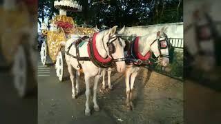 Bhubali baggi call for booking 9974616255