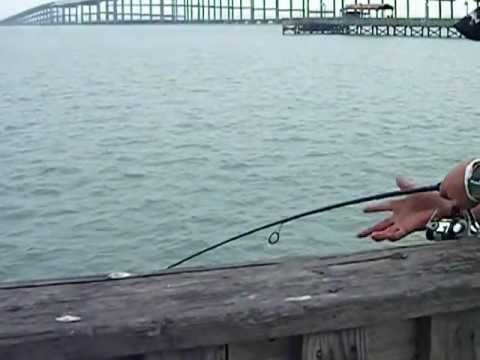 South padre island fishing on pier for South padre island fishing pier