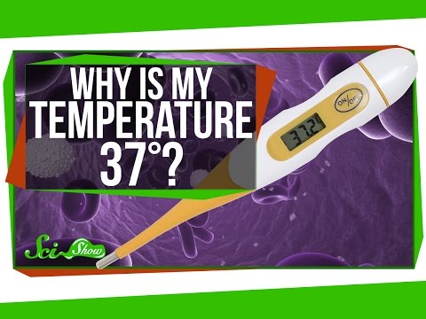 Why Is My Body Temperature 37 Degrees?