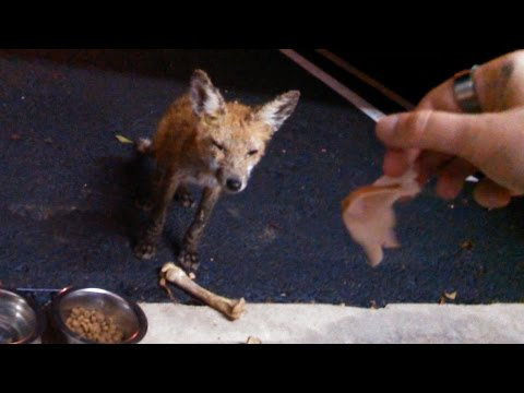 Garbage the Fox - 01