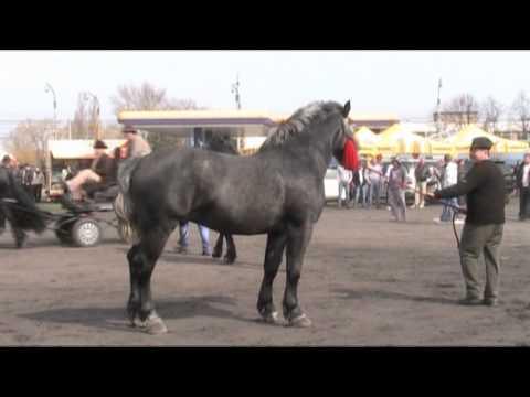 VIDEO-FOTO Sute de cai de rasă prezenţi la Sibiu