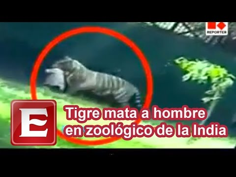 Tigre mata a hombre en zoológico de la India
