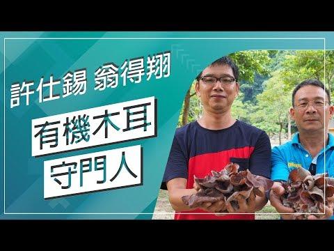 台灣-草地狀元-20180910 2/2 有機木耳守門人