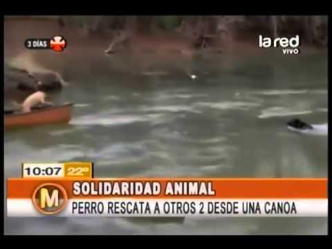 Increíbles casos de solidaridad animal