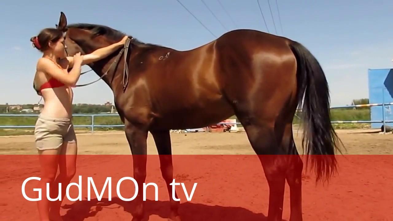 Видео порно девушки и кони
