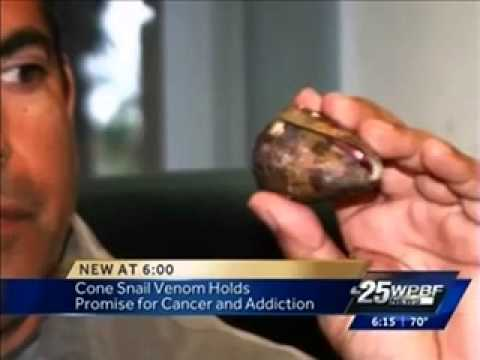 Cone Snail Venom Holds Promise for Treating Cancer and Addiction