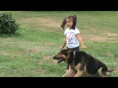 GERMAN SHEPHERD PROTECTING 4 YEAR OLD LITTLE GIRL FROM BAD GUY