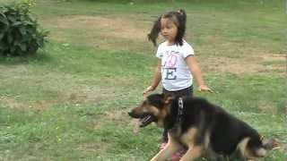 German Shepherd Protects Young Girl From Danger