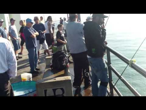 Fishing Thresher Shark at Huntington Beach Pier