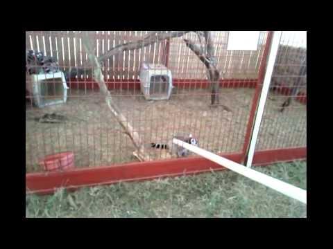 Sever's Corn Maze Animals & Animal Show 10/7/12