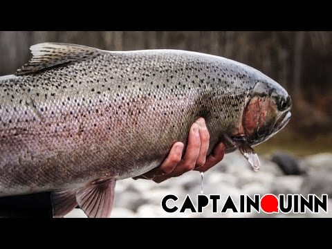 Fly Fishing for Steelhead in Northern BC