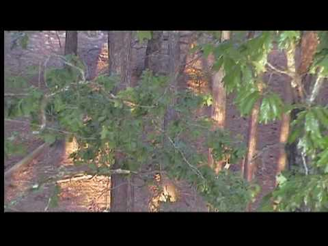2010 Bowtech Aoudad Hunt Video