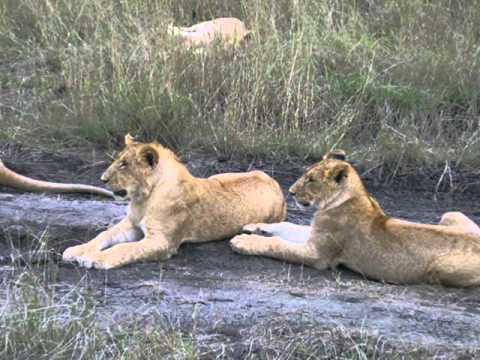 GCSE KS3 Geography- Kenya Tourism