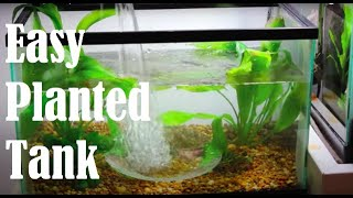 How To Set Up An Easy Planted Tank