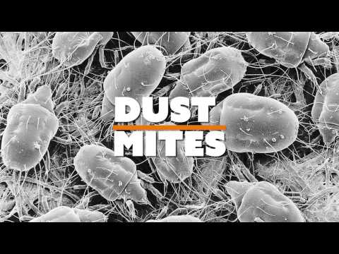 Did You Know Extension   Dust Mites