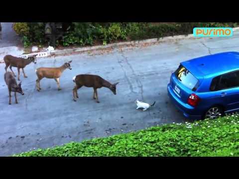 Кот против банды оленей