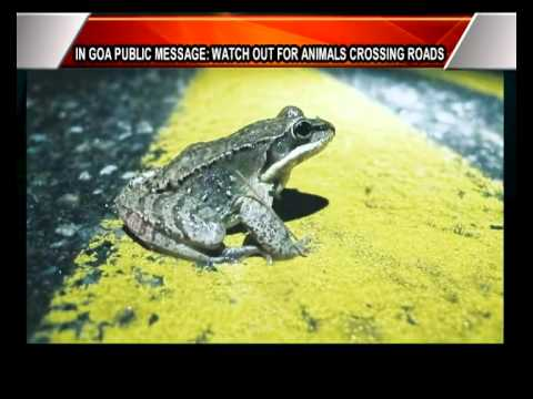 In #Goa Public Message : Watch Out For #Animals Crossing The Roads