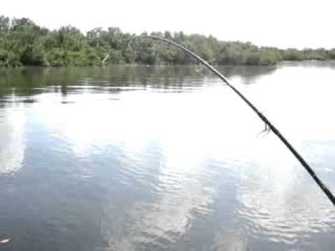 k5 fishing charters-Homosassa Fishing