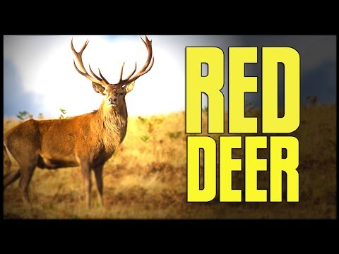 The Hunter Diaries - Red Deer