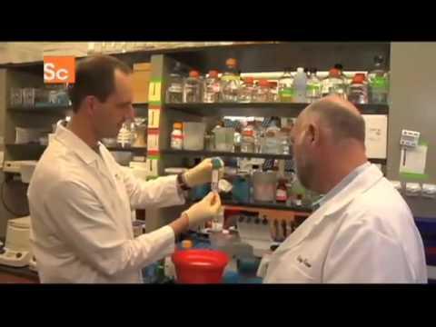 Scientists Create the First Synthetic Cell.flv