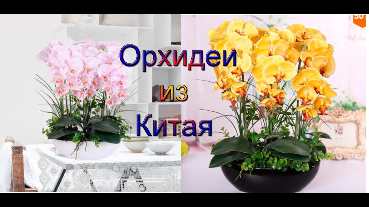Как сажать семена орхидеи из алиэкспресс 79
