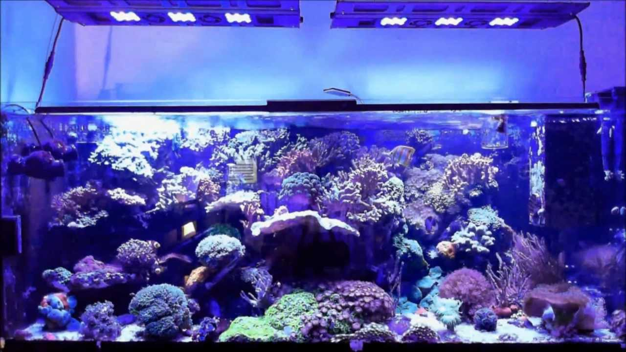 Maxspect Razor ( r420r ) Led 10000k - Sunset Time Lapse ...