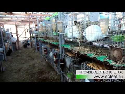 Клетки для кроликов КДК 2 и КДК 4