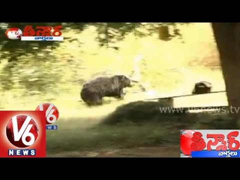 Bear attack on villagers at Warangal district - Teenmaar News...