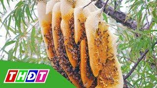 Từ 10/6/2019, lấy mật ong rừng bị phạt đến 3 triệu đồng | THDT
