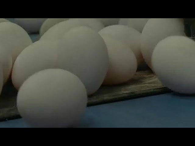 Hong Kong removes contaminated eggs