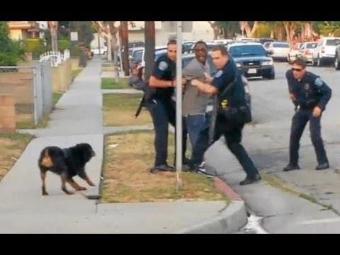 Police Shoot And Kill Dog In Front Of Owner (graphic Video) video