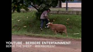 Berhe The Sheep