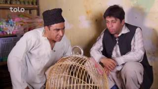 Shabake Khanda - Season 2 - Ep.39 - Gambling on Bird Fights
