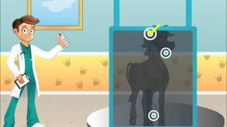 Dr. Cem Animal Hospital video for great fun-Kids Games-Animal Games