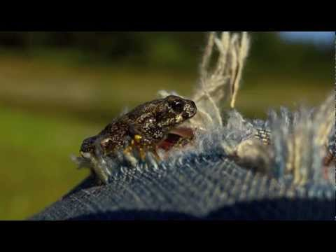 Slow Motion 2000 fps - Mortals- Un pequeno Loco, Gran Planeta - (Sony hx9v) FULL HD