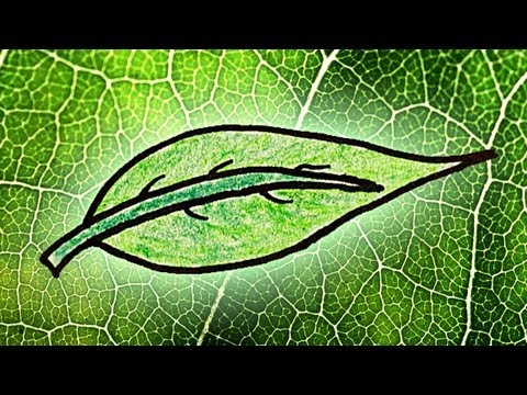 Why Are Leaves Green? Part 1
